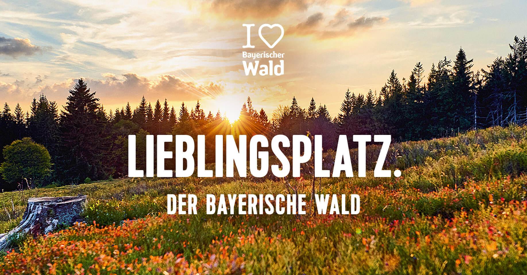 teamElgato News – I love Bayerischer Wald